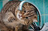 Нет воды: «Кривбассводоканал» продолжает отключать должников