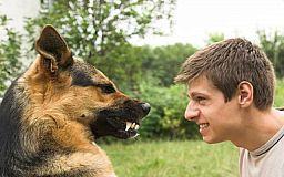 Бешенство в Днепропетровской области: Что делать, если Вас укусило животное?
