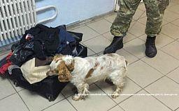 Служебный пес Жорик не дал криворожанину перевезти наркотики в парафине
