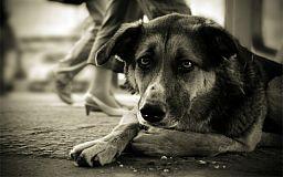 В Кривом Роге неизвестные травят животных ядом. Что делать если отравили вашу собаку