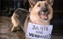 Завтра Европа выйдет на марш в поддержку украинских бездомных животных