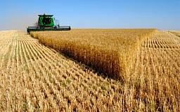 Для сохранения цен на хлеб власть закупила у фермеров зерно