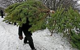 Украинцев будут штрафовать за новогоднюю ель