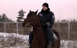 Конная милиция защищает леса Днепропетровщины от «дровосеков»