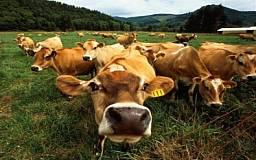 Фермеры получили дотации за содержание крупного рогатого скота