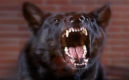 На Днепропетровщине бешеная собака покусала 7 человек