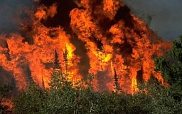 Леса Днепропетровщины будут круглосуточно патрулировать правоохранители