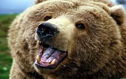 Медведь откусил мужчине ногу