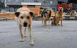 В области построят 6 приютов для бездомных собак