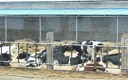 На Днепропетровщине открыта первая в Украине современная молочная ферма семейного типа