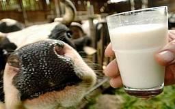В Кривом Роге и области 9 тыс семей получили господдержку на содержание крупного рогатого скота