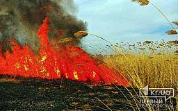 В Кривом Роге участились случаи возгорания сухостоя