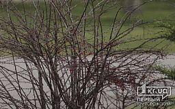 Какой будет погода в Кривом Роге 13 марта и что советуют астрологи