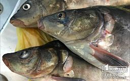Жителям Днепропетровской области запретят вылавливать рыбу