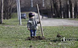 У Кривому Розі до Дня добровольця висадили 1000 дерев