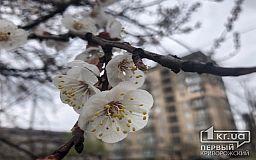 Погода в Кривом Роге 24 марта и гороскоп