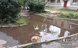Из-за порыва возле дома криворожане больше недели живут без воды
