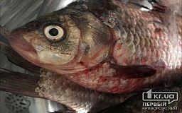 Суд оштрафовал криворожанина, который сетью ловил рыбу