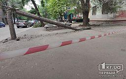 В Кривом Роге рухнуло дерево, которое сломало электроопору и оборвало провода