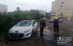 Возле роддома в Кривом Роге дерево рухнуло на автомобиль