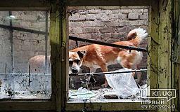 В Днепре пожарные спасли собак, которые застряли в подвале медучреждения