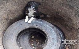 На Днепропетровщине пожарные спасли собаку, которая упала в выгребную яму