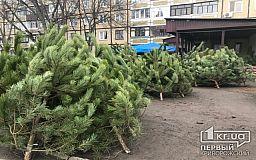 В Кривом Роге более 50 мест официальной продажи новогодней хвои