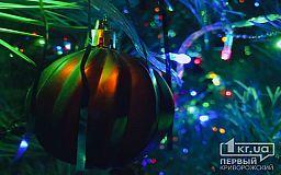 Планируют ли криворожане покупать новогоднюю хвою, — результат опроса