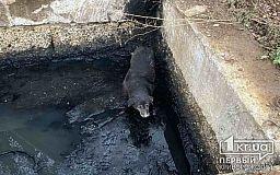 Пожарные спасли собаку, которая упала в колодец
