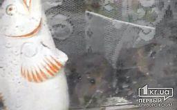 В многоквартирном доме завелись крысы из-за женщины, складирующей мусор, - криворожане