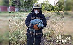 Пожарные спасли в Кривом Роге кота и передали его хозяевам