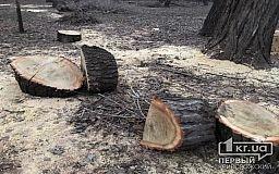 В Кривом Роге полицейские пресекли незаконную вырубку леса