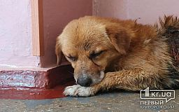 Злоумышленники живьем снимали шкуру с собаки в Кривом Роге (фото 18+)