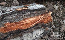 В Кривом Роге из-за сильного ветра дерево рухнуло на автомобиль