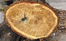 Полицейские задержали криворожанина со спиленной древесиной