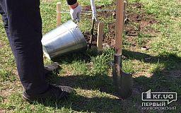 1,2 миллиона гривен в Кривом Роге потратят на саженцы и цветы в парке культуры