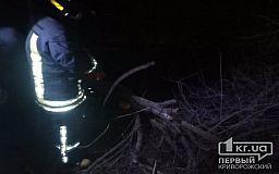 В Кривом Роге на дорогу рухнуло дерево