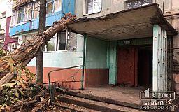 В Кривом Роге на балкон пятиэтажного дома рухнуло сухое дерево