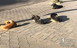 Криворожане просят построить в городе приют для бездомных животных