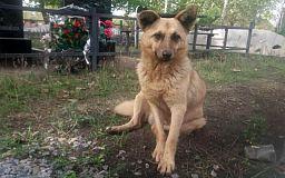 На криворожском кладбище пес живет на могиле умершего хозяина