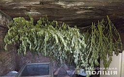 У двух криворожан изъяли 4 килограмма марихуаны