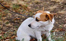 Заседание по делу обвиняемого в нападениях на криворожанок с собаками перенесли