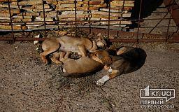 В Кривом Роге пожарные спасли пса, который упал в яму
