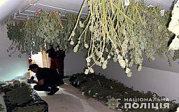 Около 30 килограммов элитной конопли и оружие изъяли у 55-летнего криворожанина дома (видео)