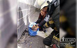 Криворожские пожарные спасли котенка, застрявшего в щели под многоэтажкой