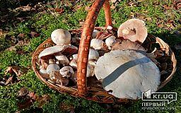 ТОП-5 правил для грибників, - добірка «Першого Криворізького»