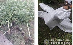 Криворожанин выращивал коноплю на приусадебном участке