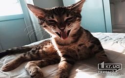 ТОП-5 причин от «Первого Криворожского»: почему стоит завести кота