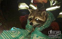 Пожарные спасли енота, застрявшего на дереве в Новомосковске