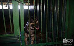 В криворожском Центре обращения с животными реконструируют вентиляцию в зимних вольерах